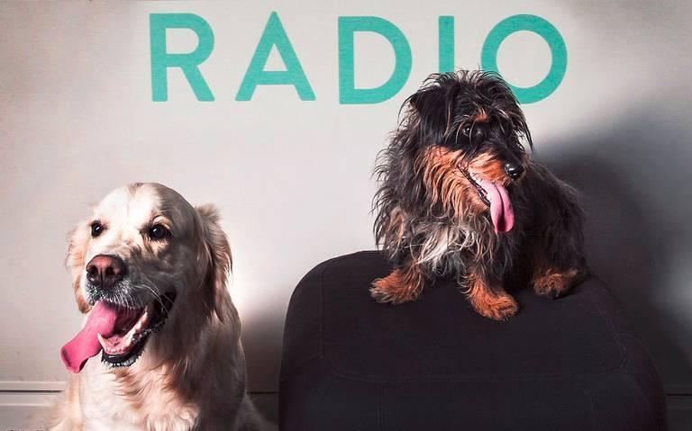 """Hau-Hau Champion ja Helmiradio masinoivat koirien juontaman radioshow'n: """"Useimmat koirat pitävät erityisesti soft rockista ja reggae-musiikista"""""""
